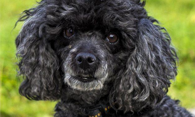 Victoria Is Estero's Dog-Sitter, Cat-Sitter, Pet-Sitter